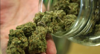 Marijuana may help cure broken bones: study
