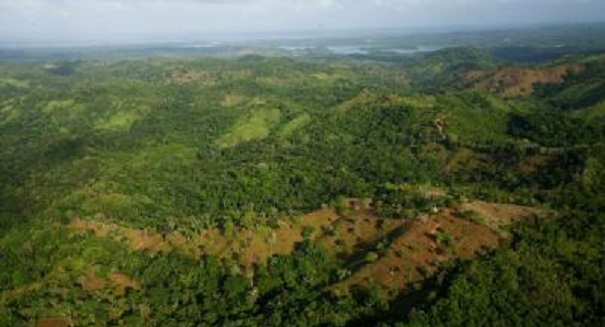 Tropical forests 'fix' themselves, project finds